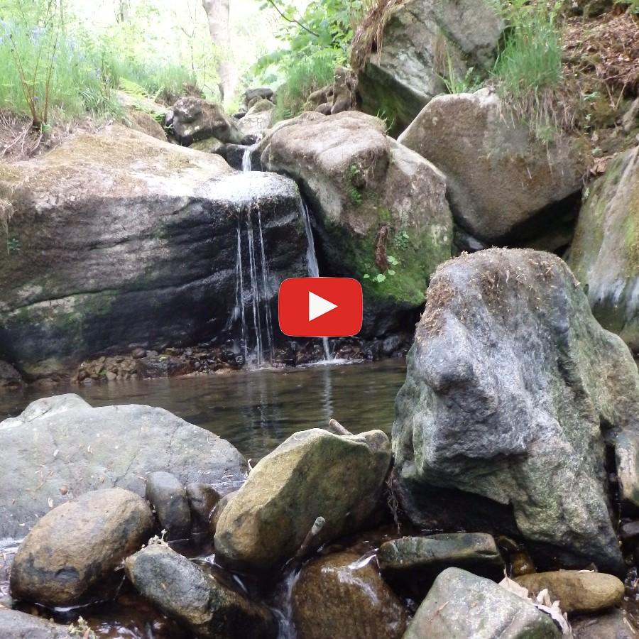 COVID-19 Udate-video
